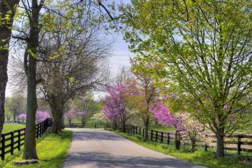 Penn Valley